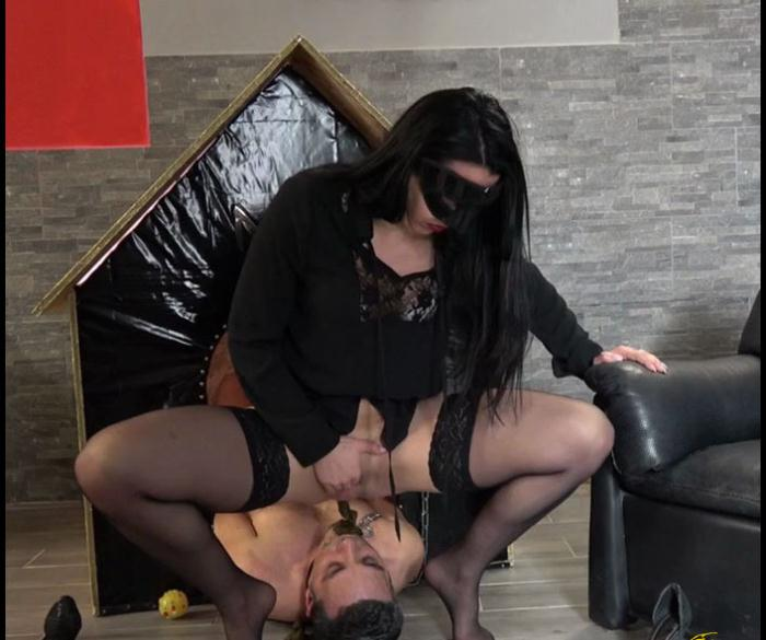 (MISTRESS GAIA) - SCAT IN HIS DOGHOUSEHD version [HD 720p] (115 MB)