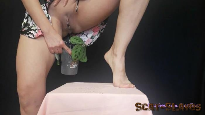 New scat: (Big pile, New scat, Scatting Girl, Shitting Ass) - I plant a flower and fertilize it [FullHD 1080p] (339 MB)